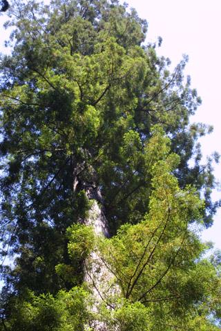 Image http://bioimages.vanderbilt.edu/lq/baskauf/wsese3-wplookup41946.jpg