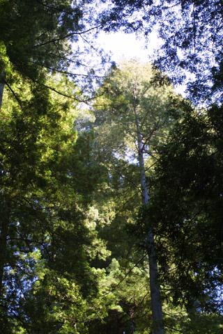 Image http://bioimages.vanderbilt.edu/lq/baskauf/wsese3-wplookup42017.jpg