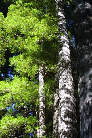Image http://bioimages.vanderbilt.edu/lq/baskauf/wsese3-wplookup42104.jpg