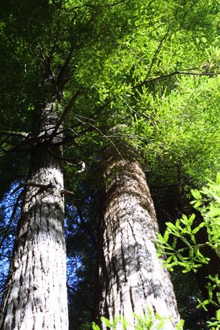 Image http://bioimages.vanderbilt.edu/lq/baskauf/wsese3-wplookup42107.jpg