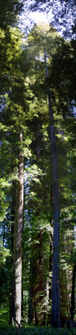 Image http://bioimages.vanderbilt.edu/lq/baskauf/wsese3-wpmontage42019.jpg