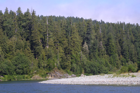 Image http://bioimages.vanderbilt.edu/lq/baskauf/wsese3-wpsmith-river42133.jpg