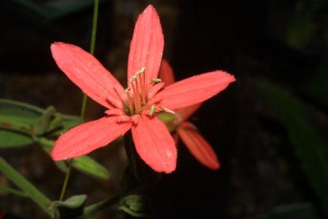 Image http://bioimages.vanderbilt.edu/lq/baskauf/wsire2-flfront37451.jpg