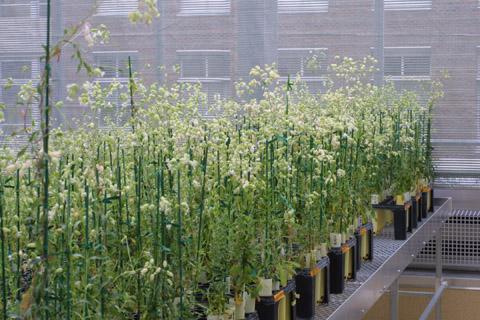 Image http://bioimages.vanderbilt.edu/lq/baskauf/wsivu--wpgreenhouse13753.jpg