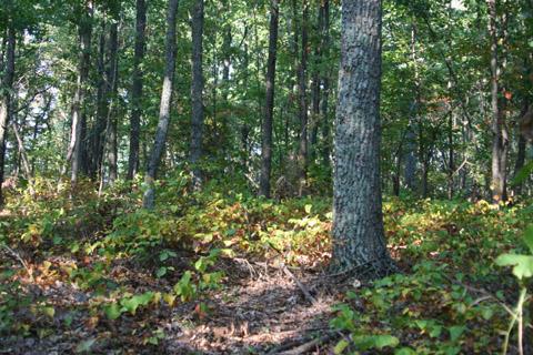 Image http://bioimages.vanderbilt.edu/lq/baskauf/wsmro--wpdistant70825.jpg
