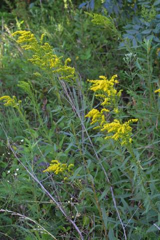 Image http://bioimages.vanderbilt.edu/lq/baskauf/wsogi--wp28347.jpg