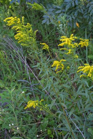Image http://bioimages.vanderbilt.edu/lq/baskauf/wsogi--wp28361.jpg