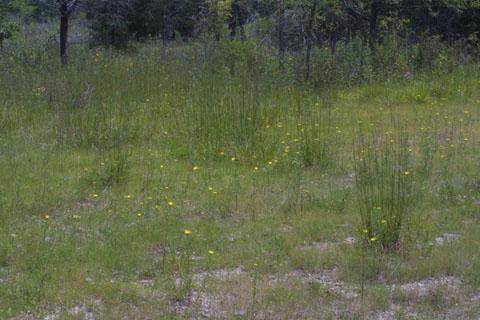 Image http://bioimages.vanderbilt.edu/lq/baskauf/wspva--wpdistant36979.jpg
