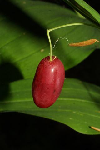 Image http://bioimages.vanderbilt.edu/lq/baskauf/wstam2-frclose42511.jpg