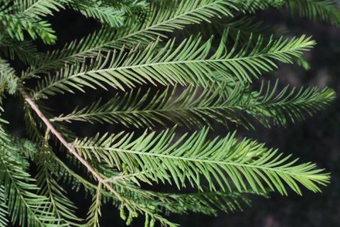 Image http://bioimages.vanderbilt.edu/lq/baskauf/wtadi2-lf12651.jpg