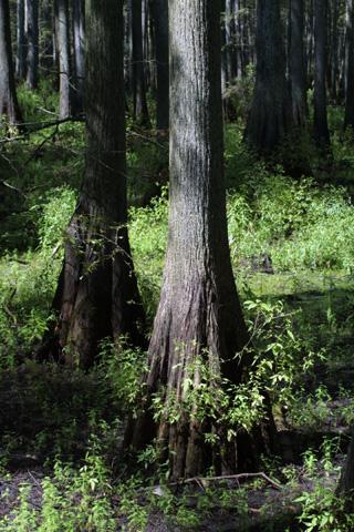 Image http://bioimages.vanderbilt.edu/lq/baskauf/wtadi2-wpbuttswell15766.jpg