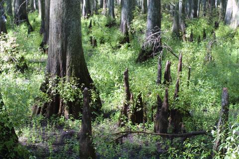 Image http://bioimages.vanderbilt.edu/lq/baskauf/wtadi2-wpknees15762.jpg