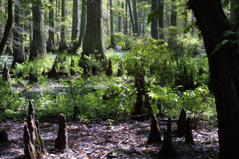 Image http://bioimages.vanderbilt.edu/lq/baskauf/wtadi2-wpknees15839.jpg