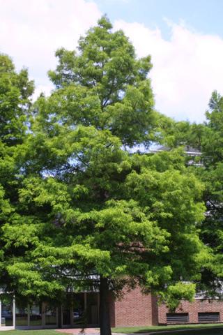 Image http://bioimages.vanderbilt.edu/lq/baskauf/wtadi2-wplarge-planted12664.jpg