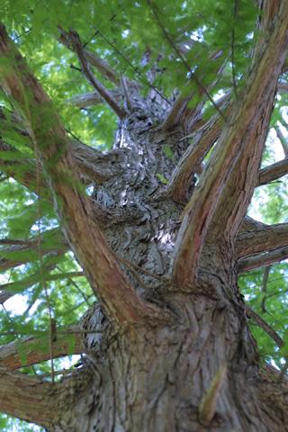 Image http://bioimages.vanderbilt.edu/lq/baskauf/wtadi2-wplookup-large12663.jpg