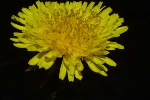 Image http://bioimages.vanderbilt.edu/lq/baskauf/wtaof--fl26964.jpg