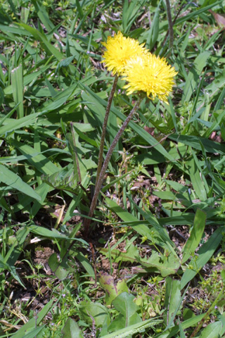 Image http://bioimages.vanderbilt.edu/lq/baskauf/wtaof--wp12183.jpg