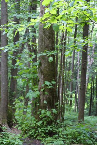 Image http://bioimages.vanderbilt.edu/gq/baskauf/gtiamh-wproot-sprouts11469.jpg