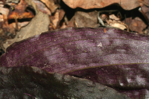 Image http://bioimages.vanderbilt.edu/lq/baskauf/wtidi--lfmargin-uplow50577.jpg