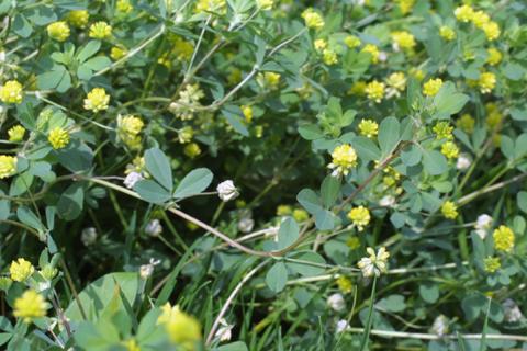 Image http://bioimages.vanderbilt.edu/lq/baskauf/wtrca5-wp20633.jpg