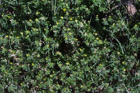 Image http://bioimages.vanderbilt.edu/lq/baskauf/wtrdu2-wpmass23953.jpg