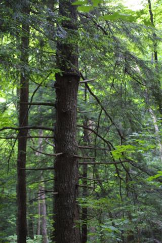 Image http://bioimages.vanderbilt.edu/lq/baskauf/wtsca--wplarge-forest-11492.jpg