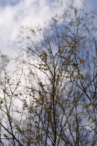 Image http://bioimages.vanderbilt.edu/lq/baskauf/wulam--flin-flower10344.jpg