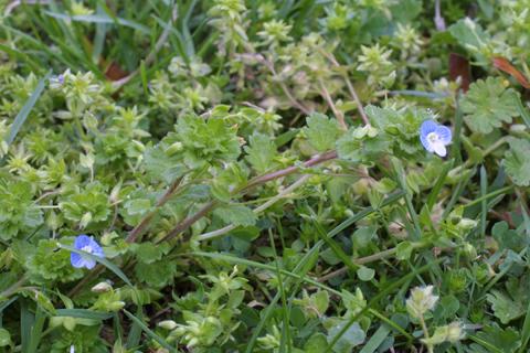 Image http://bioimages.vanderbilt.edu/lq/baskauf/wvepe3-wp18736.jpg