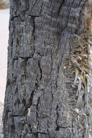 Image http://bioimages.vanderbilt.edu/lq/baskauf/wyubr--br14946.jpg