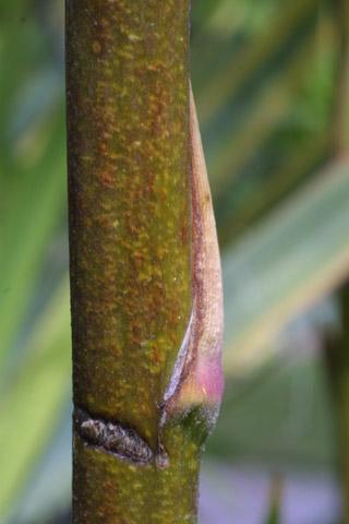 Image http://bioimages.vanderbilt.edu/lq/baskauf/wyufl2-br27139.jpg