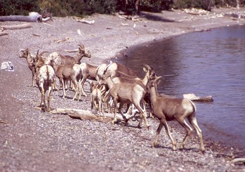 Image http://bioimages.vanderbilt.edu/lq/bassettjh/wovicanglacier2jb266.jpg