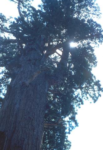 Image http://bioimages.vanderbilt.edu/lq/bassettjh/wsegi2-wplook-up-grantjb269.jpg