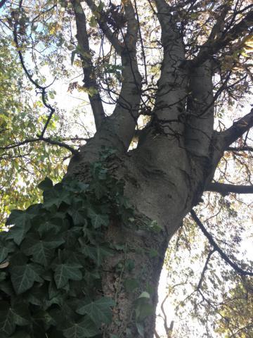 Image http://bioimages.vanderbilt.edu/lq/chena/w708_2.jpg