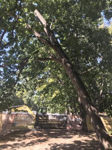 Image http://bioimages.vanderbilt.edu/lq/derasaris/w6471.jpg