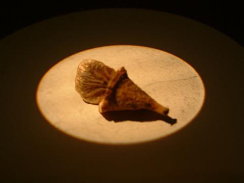 Image http://bioimages.vanderbilt.edu/lq/eickmeierwg/wjedi--frwe622.jpg