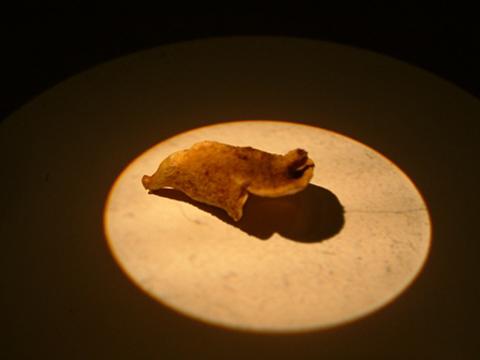 Image http://bioimages.vanderbilt.edu/lq/eickmeierwg/wjedi--frwe623.jpg