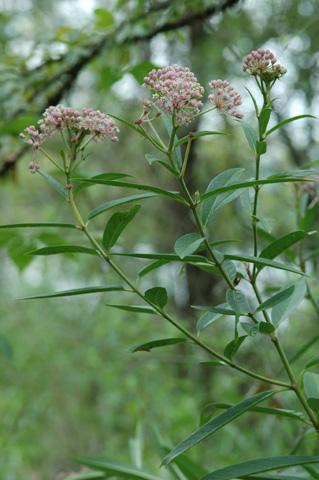 Image http://bioimages.vanderbilt.edu/lq/hessd/wasin--wp0528e5216.jpg