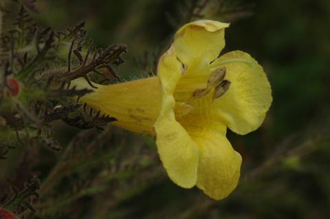 Image http://bioimages.vanderbilt.edu/lq/hessd/waupe--fl0489e5223.jpg