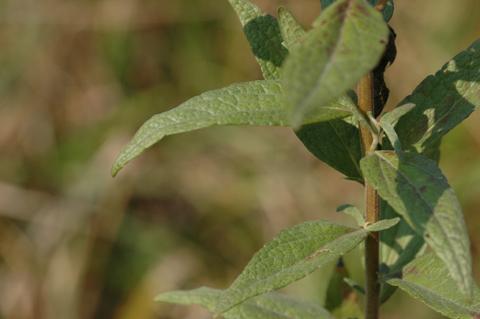 Image http://bioimages.vanderbilt.edu/lq/hessd/wbreu--lf360e5041.jpg