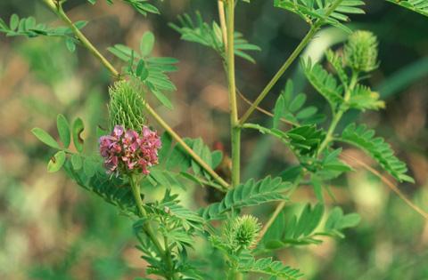 Image http://bioimages.vanderbilt.edu/lq/hessd/wdafo2-fl960520-29e5247.jpg