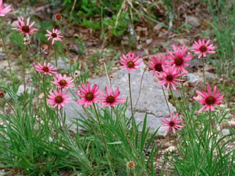 Image http://bioimages.vanderbilt.edu/lq/hessd/wecte3-wp000511-07e5418.jpg