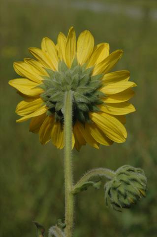 Image http://bioimages.vanderbilt.edu/lq/hessd/whemo2-flback0436e5289.jpg