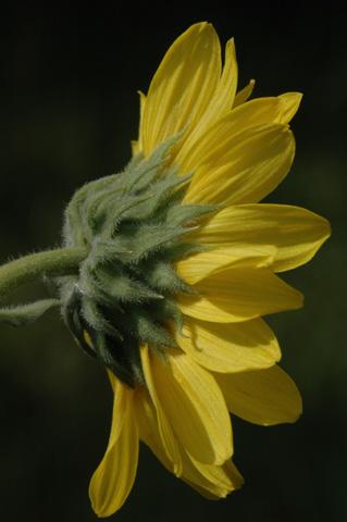 Image http://bioimages.vanderbilt.edu/lq/hessd/whemo2-flside0438e5292.jpg