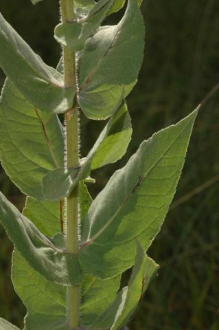 Image http://bioimages.vanderbilt.edu/lq/hessd/whemo2-st0443e5295.jpg