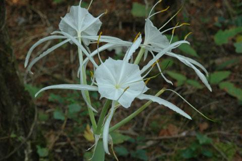 Image http://bioimages.vanderbilt.edu/lq/hessd/whyca9-fl0570e5298.jpg