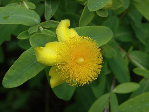 Image http://bioimages.vanderbilt.edu/lq/hessd/whyfr--flfront0321-2-1x4e5431.jpg