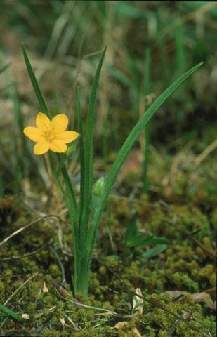Image http://bioimages.vanderbilt.edu/lq/hessd/whyhi2-wp960519-20e5432.jpg