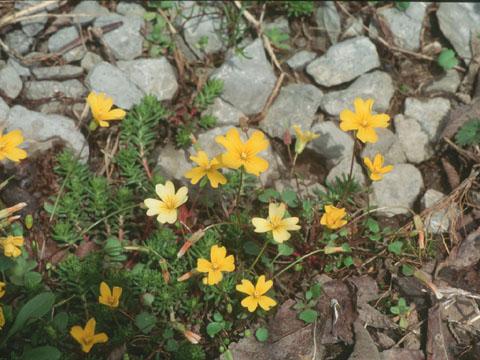 Image http://bioimages.vanderbilt.edu/lq/hessd/wlest7-wp940319a-17e5435.jpg