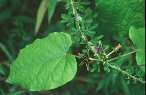 Image http://bioimages.vanderbilt.edu/lq/hessd/wmago--fl940716a-22e5317.jpg