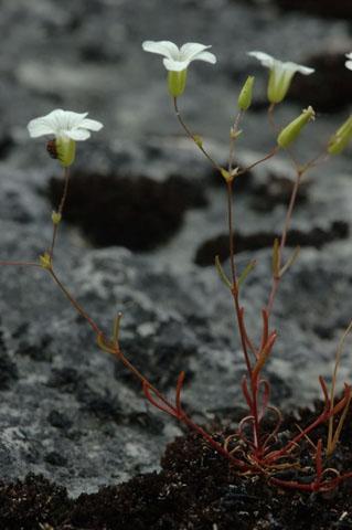 Image http://bioimages.vanderbilt.edu/lq/hessd/wmipa6-wp0126e5447.jpg